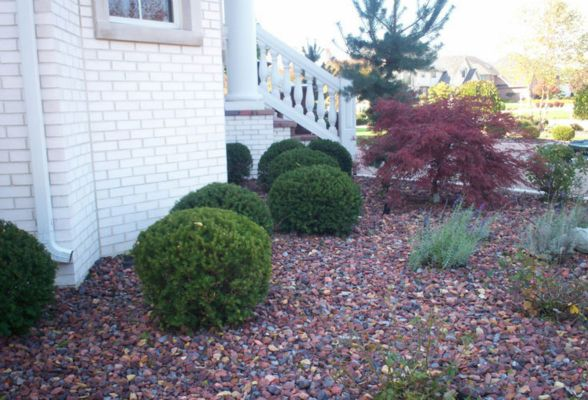 We offer all services for plants and bed maintenance